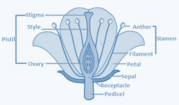 NCERT Solutions for Class 10 Science Chapter 8 How Do Organisms Reproduce image 1