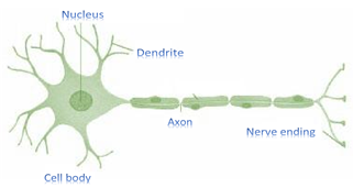 NCERT Solutions for Class 9 Science Chapter 6 Tissues image 1