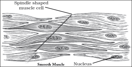 NCERT Solutions for Class 9 Science Chapter 6 Tissues image 3