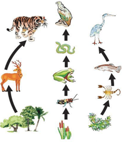 NCERT Solutions for Class 7 Science Chapter 1 Nutrition in Plants image 2