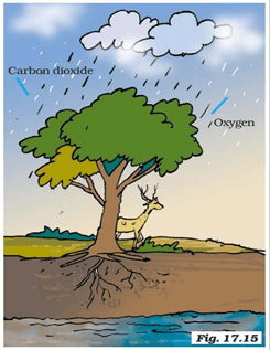 NCERT Solutions for Class 7 Science Chapter 17 Forests Our Lifeline image 1