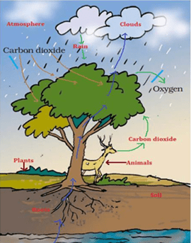 NCERT Solutions for Class 7 Science Chapter 17 Forests Our Lifeline image 2