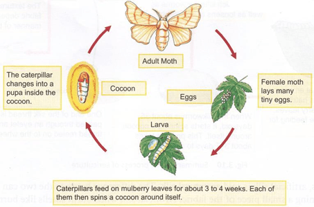 NCERT Solutions for Class 7 Science Chapter 3 Fibre to Fabric image 1